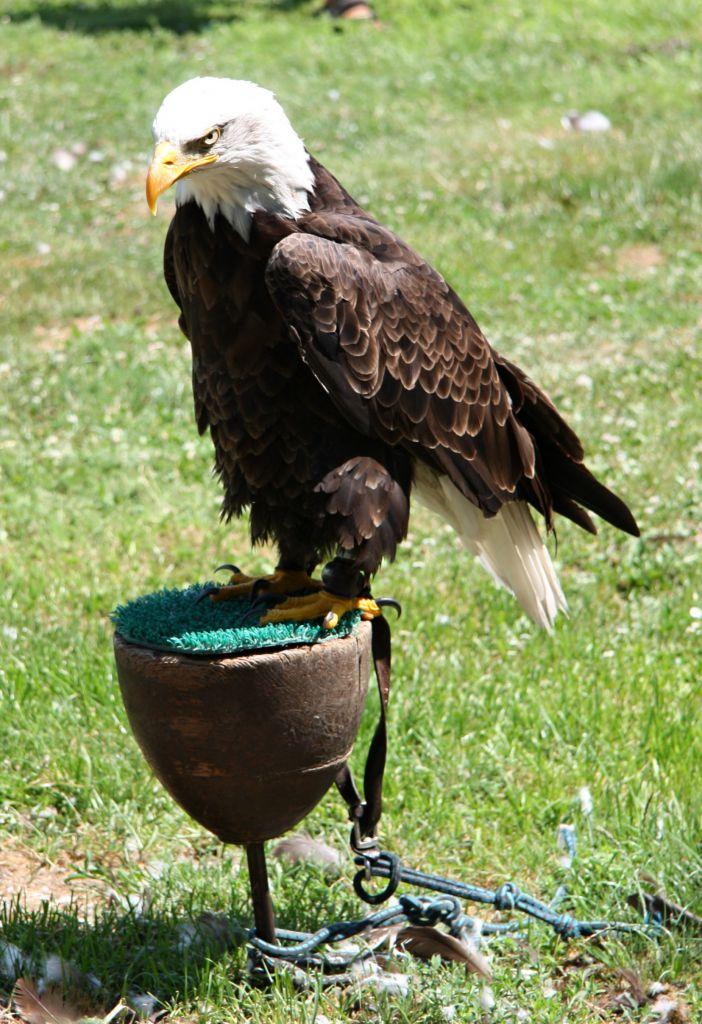 Ukázka dravých ptáků 1